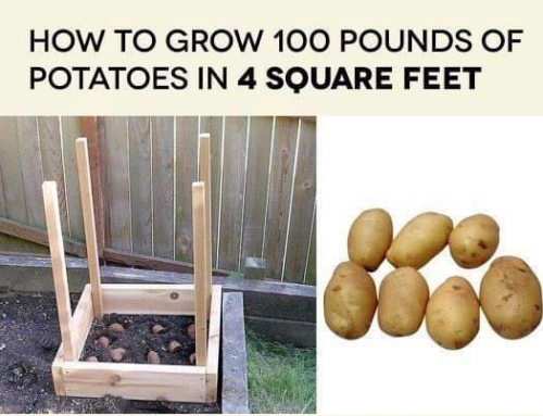 How to Grow 100 lbs of Potatoes in 4 sq. ft.