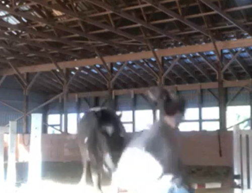 Playing With Horses